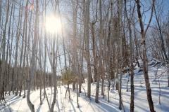 Winter-in-Ontario