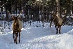 Ontario-Wildlife
